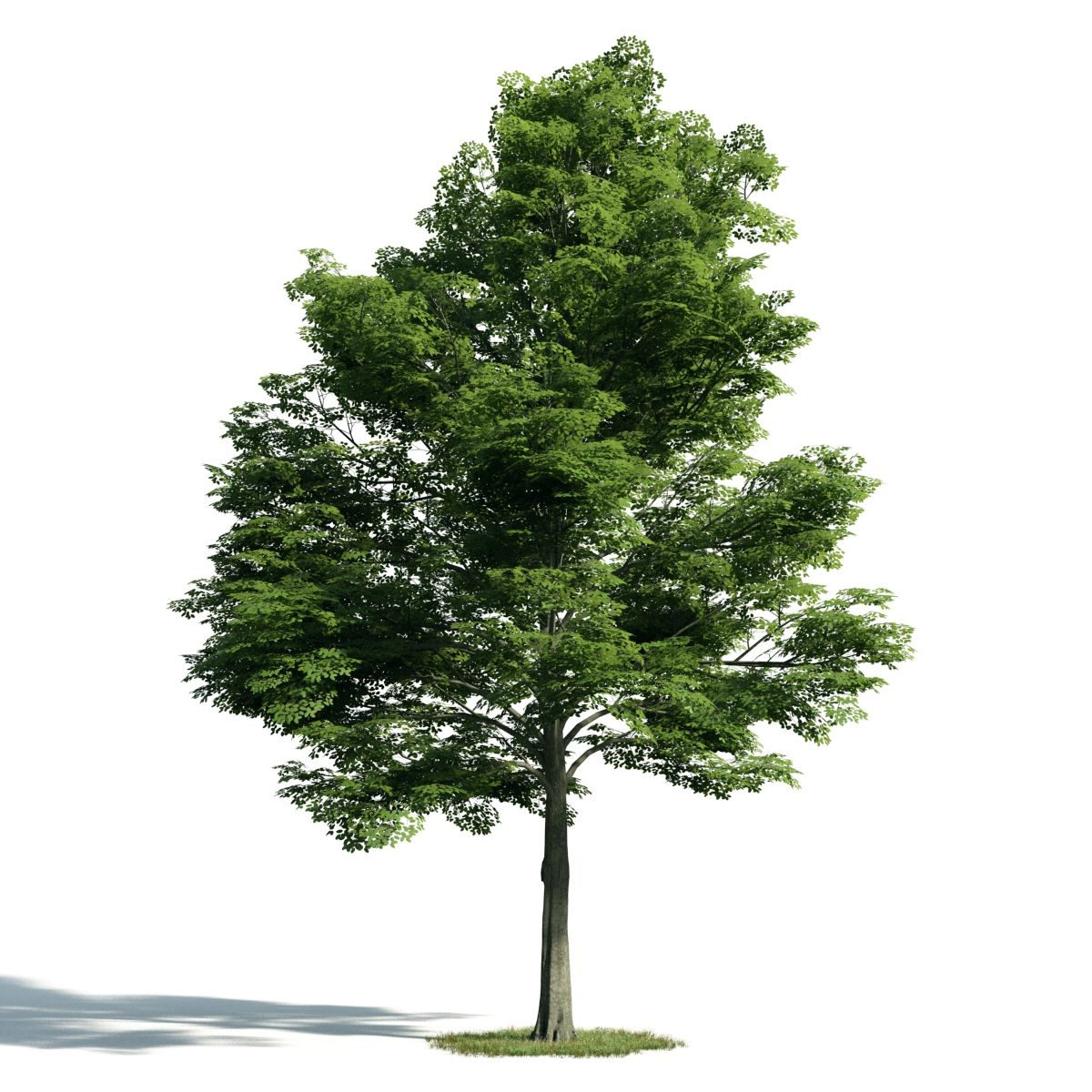 SKETCHUP] 3D TREE – VRAY READY | Warehouse