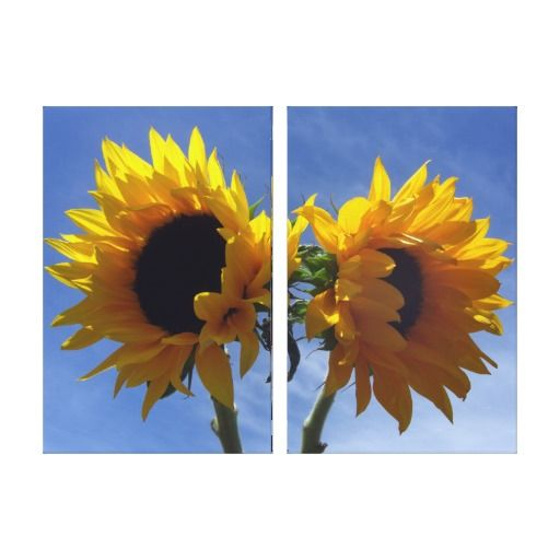 Two Sunflowers 2-Panel Wrapped Canvas Stretched Canvas Print - Two bright yellow sunflowers against a blue sky. Floral photography, taken spring 2009 in Corralitos, California.