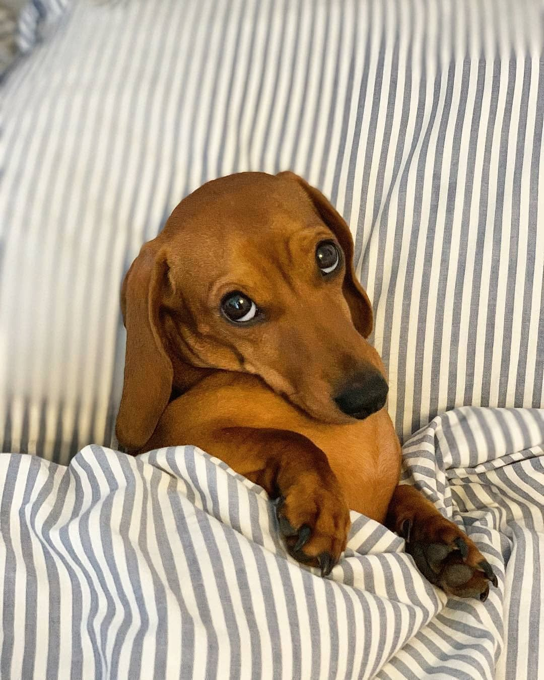 Good Morning Mommy Photo By Piglet Thesausagedog