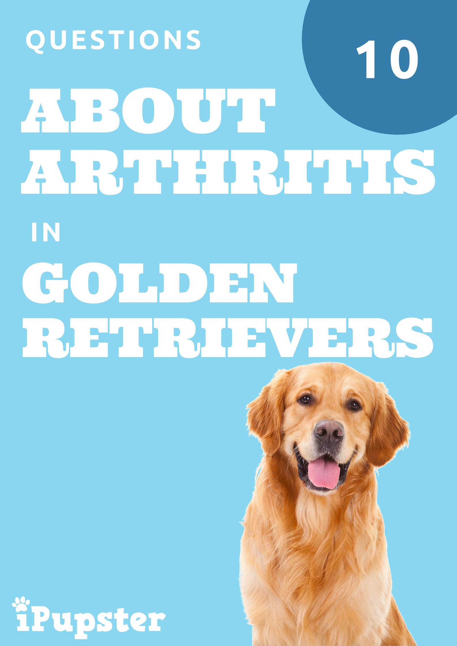 10 Questions about Arthritis in Older Golden Retriever