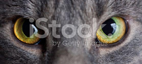 Cat eye - Stock image