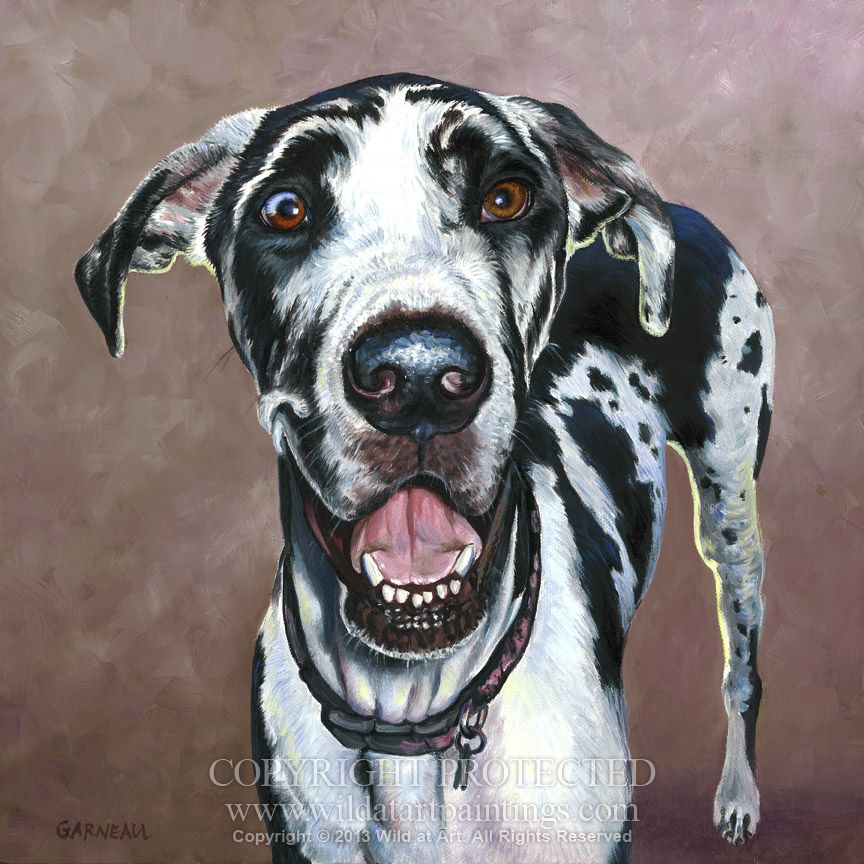 Abby Harlequin Great Dane Pet Portrait Oil Painting On 12 X 12