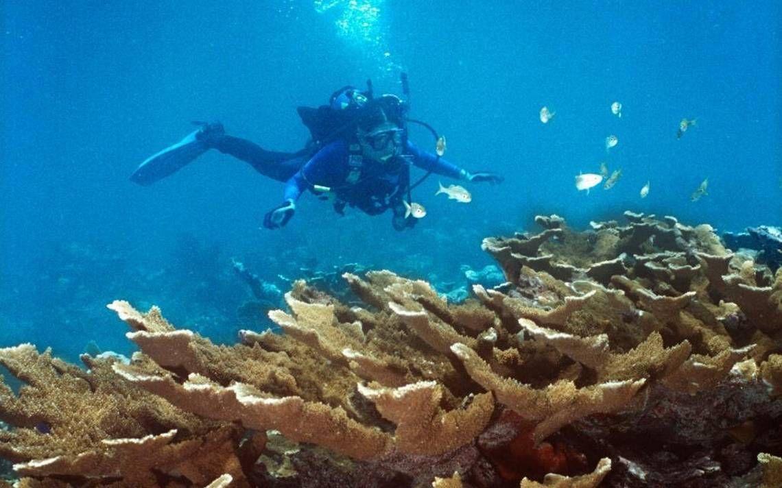 Vanishing ocean floor in the Florida Keys worsens risks