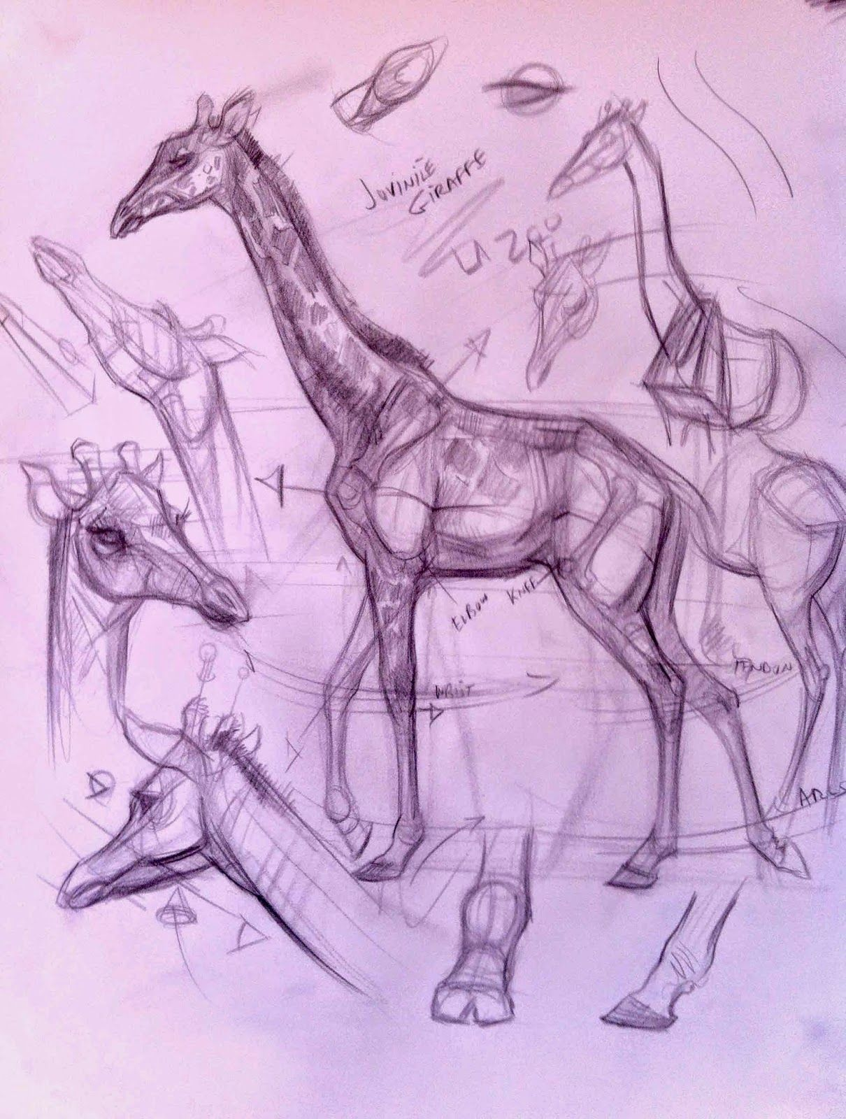 Recent Demos At The Zoo And Page Museum Animal Drawings Animal Sketches Animal Art
