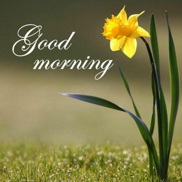 good morning greetings mornings pinterest morning images
