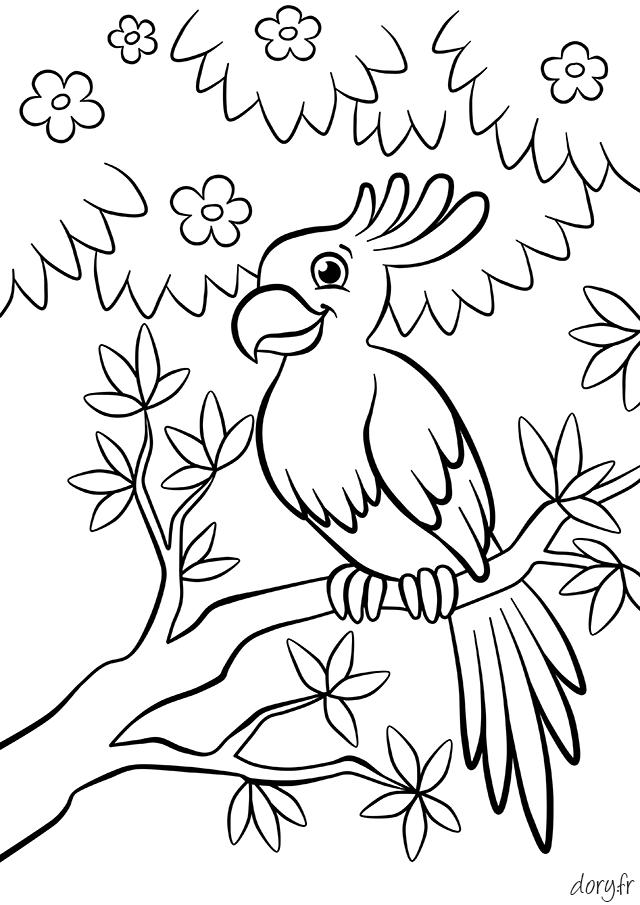 dessin imprimer un perroquet sur une branche - Dessin Colorier