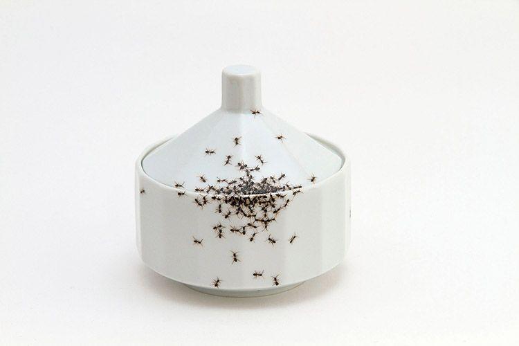 Porcelaine et insectes par Evelyn Bracklow Kitsch