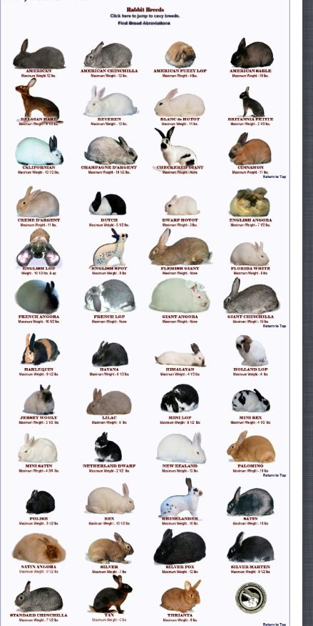 Bunny - good image rabbit Pinterest Rabbit, November and Bunny