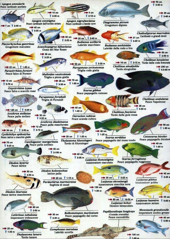Indian Ocean Fish Www Fishinaddict Com Fish Chart Sea Fish Marine Fish