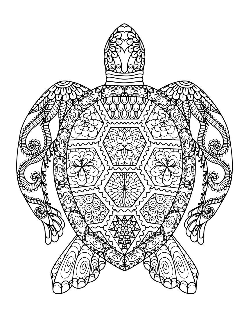 Parking Turtle Coloring Page Youngandtae Com Turtle Coloring Pages Colouring Sheets For Adults Mandala Coloring Pages