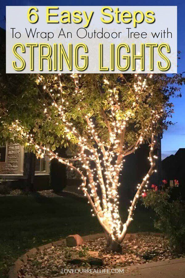 Wrap Lights on an Outdoor Tree in 6 Easy Steps Christmas
