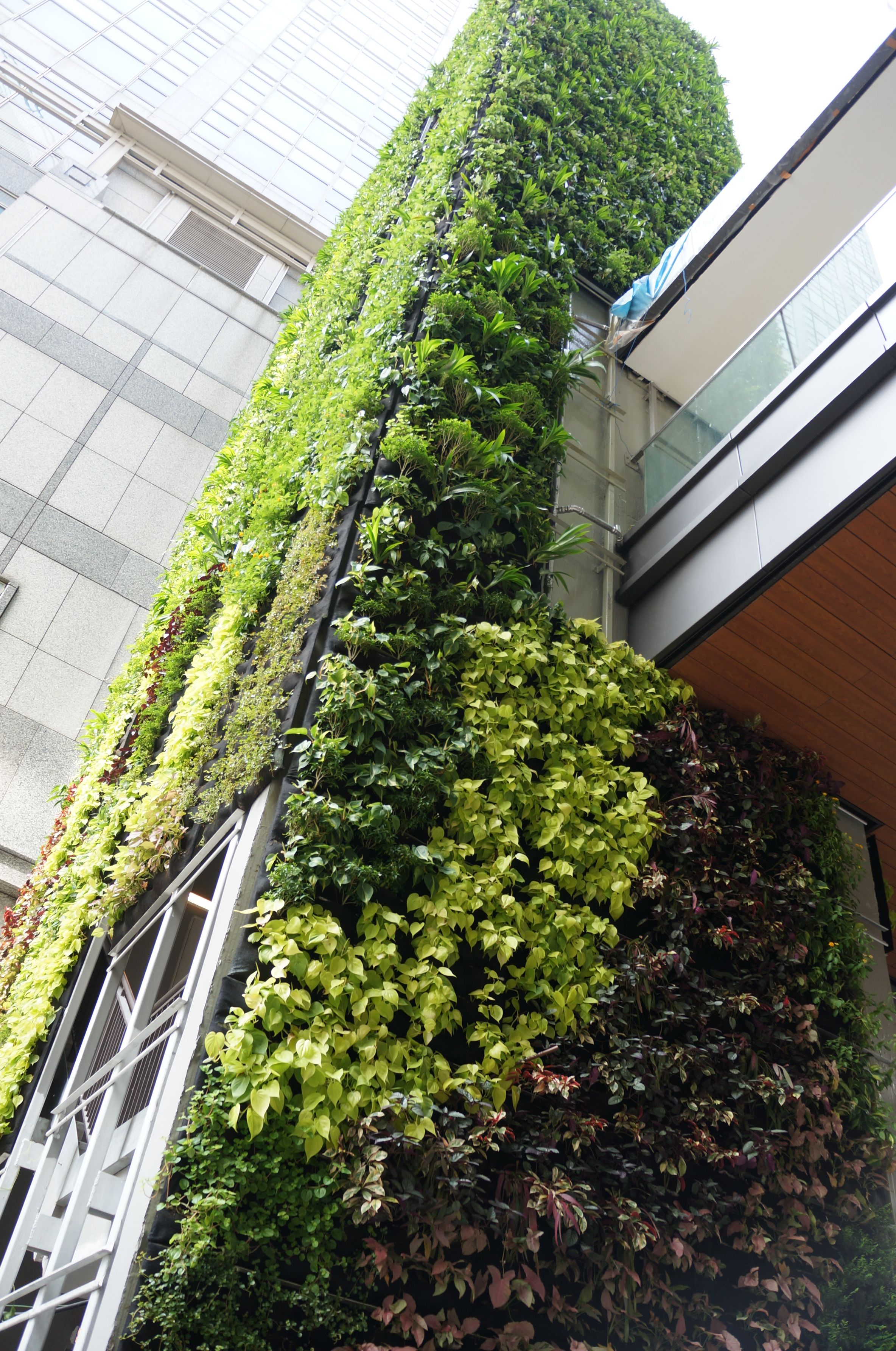 450m2 30m high GVG Greenwall installed in 7 days. (avec