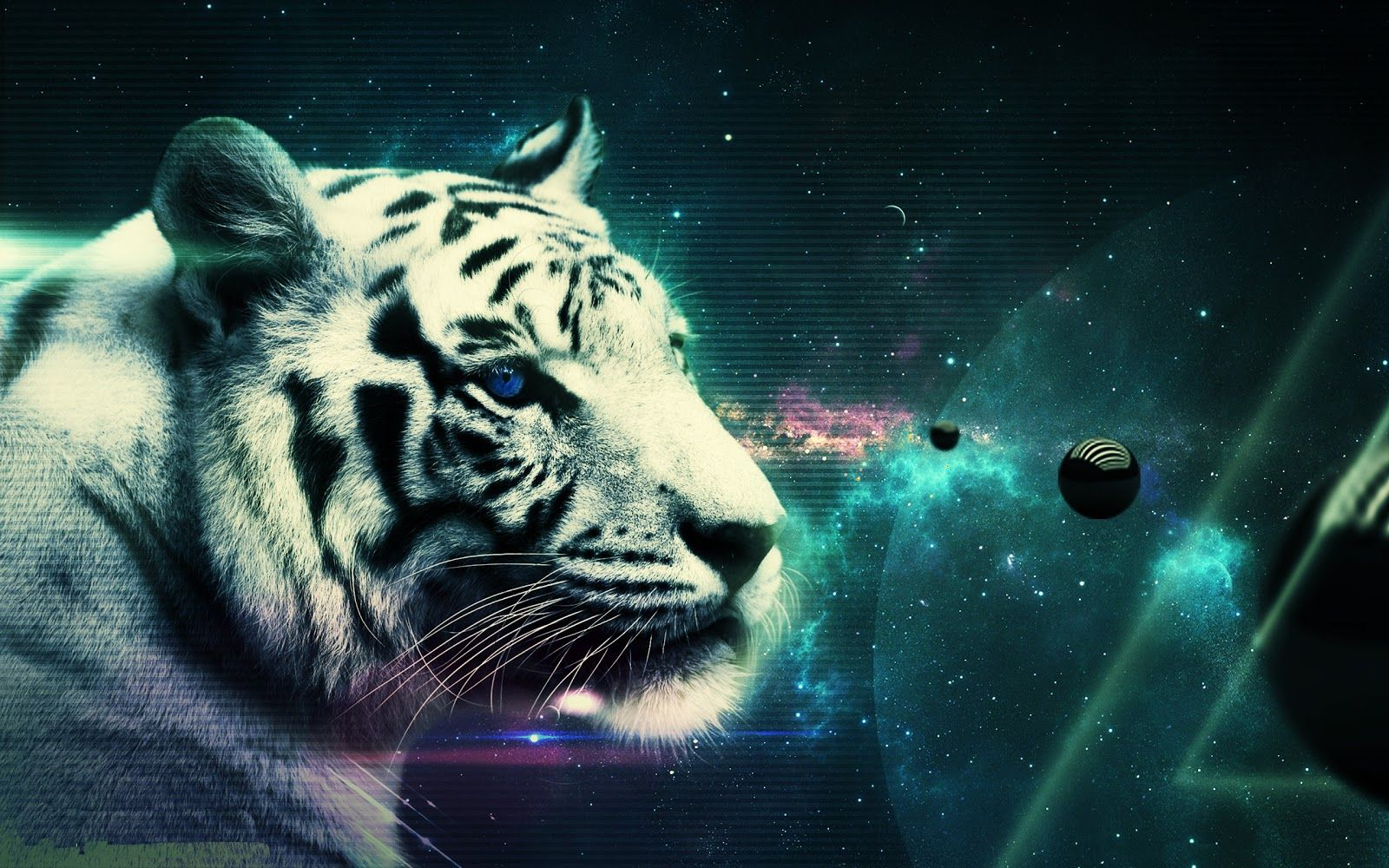 White Tiger Beautiful Tiger Hd Tiger Images Sleeping Tiger High Tiger Wallpaper Animal Wallpaper Tiger Pictures