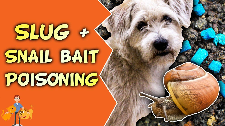Slug And Snail Bait Poisoning Shake Bake Your Dog Pets Pet
