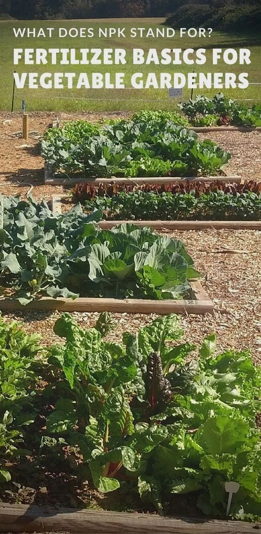 what does npk stand for and other fertilizer basics garden rh pinterest cl