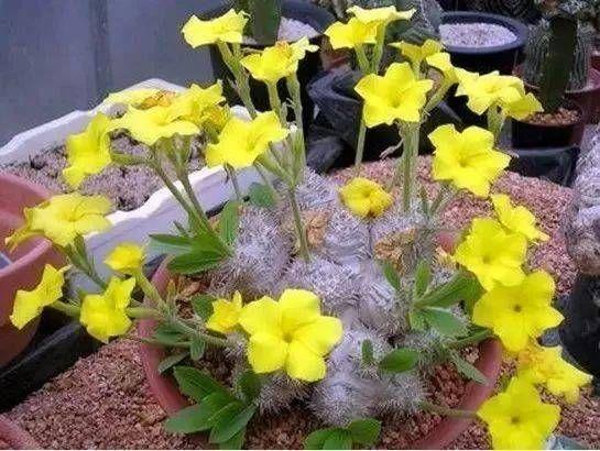 Photo of 天价!天价!名贵植物排行,令人大开眼界!_手机搜狐网