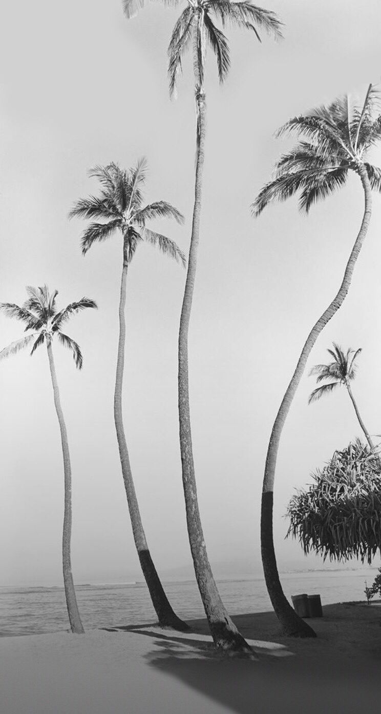 Black And White Palm Trees Iphone Wallpaper California Dreaming Black And White Beach Beach Photography