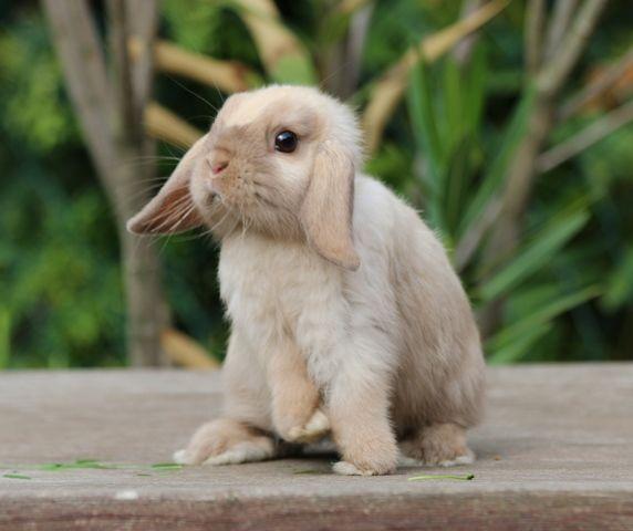 Schone Kaninchen Nhd Zwergwidder Co Auch Fur Dich Zu Verlieben Zwergwidder Kaninchen Kaninchen Tiere