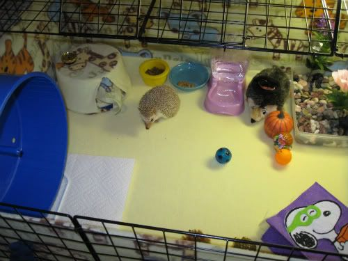 Digging Box Hedgehog Central Hedgehog Pet Care Amp Owner