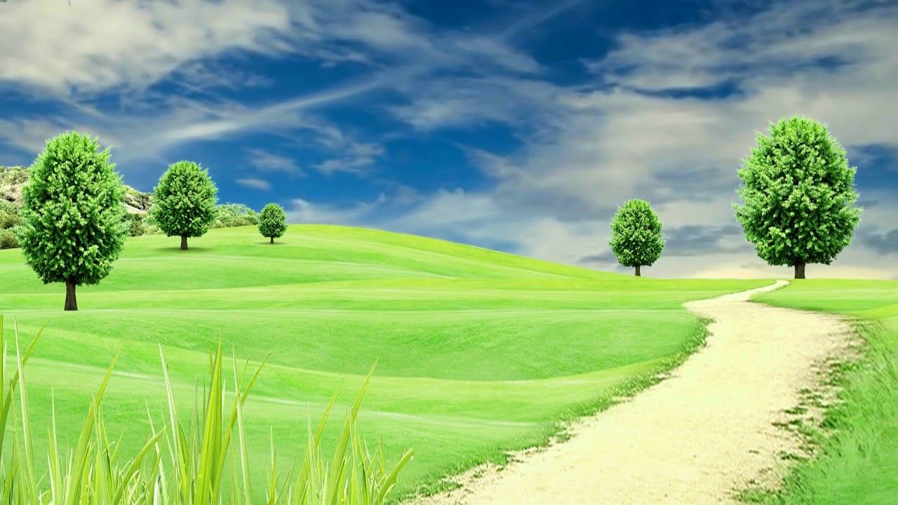 Hd 1080p Nature Tree Scenery Video Royalty Free Landscape Video 787 Video Background Greenscreen Natural Background