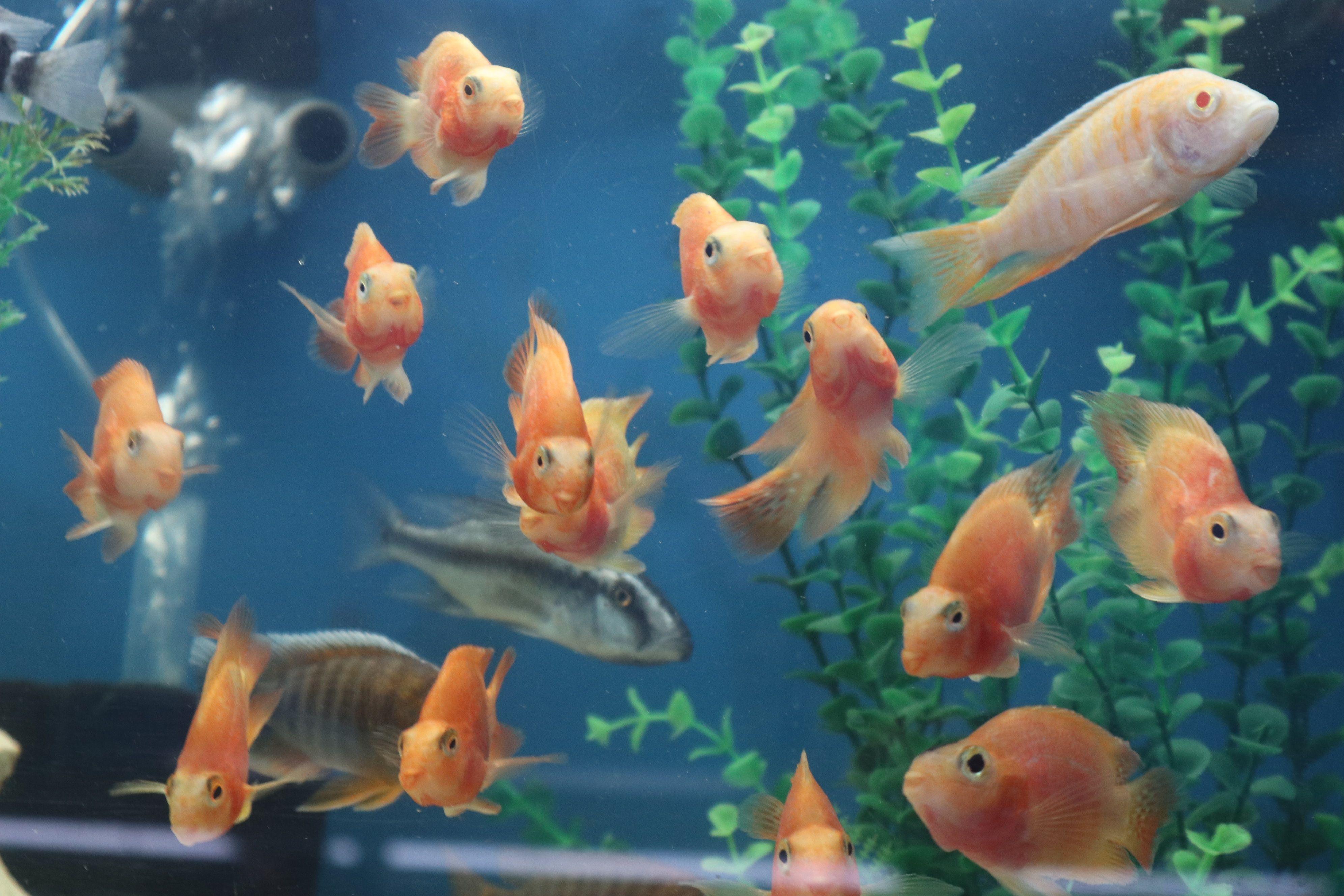 Pin On Exotic Fish