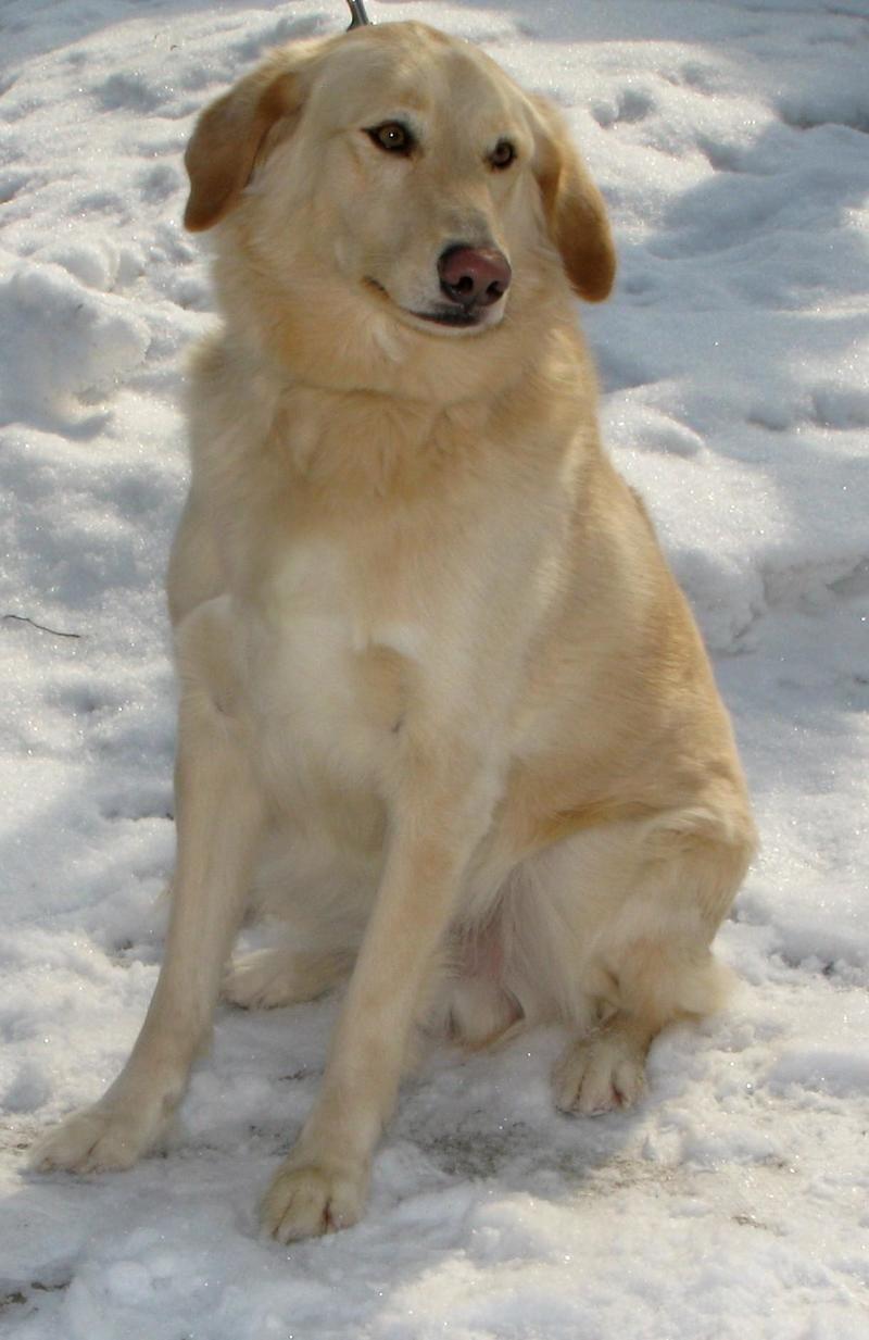 Petdetail Petfinder Dog Adoption Like Animals Pets