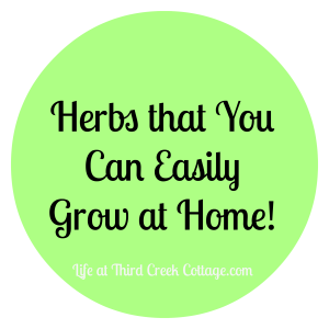 My Favorite Herbs That Everyone Needs in Their Garden!