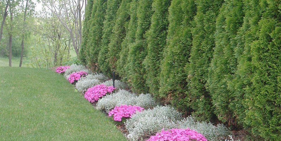 Zaremba And Company Landscape Clarkston Mi English Garden Design Arborvitae Landscaping Privacy Landscaping