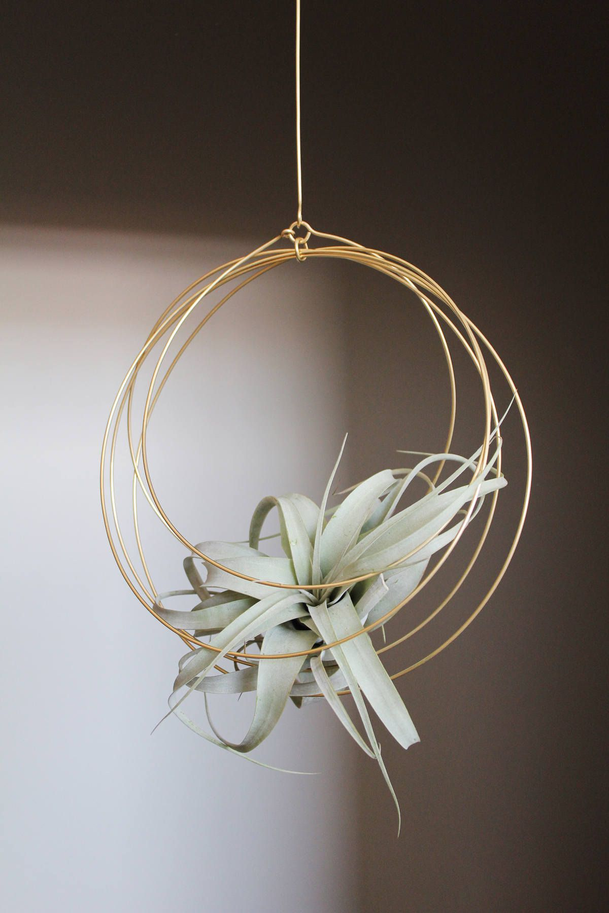 Large airplant with Brass hanging ornament Xerographica