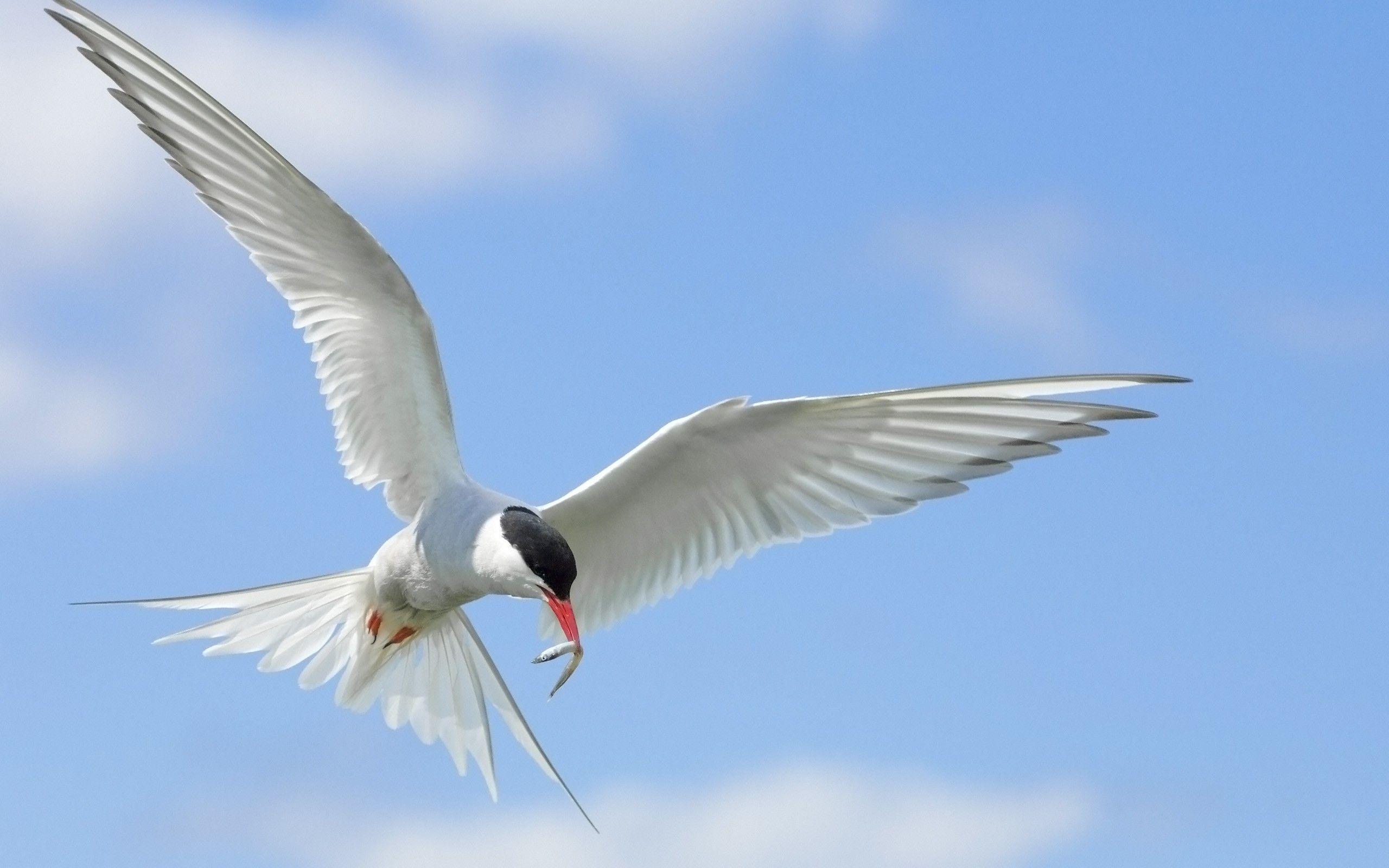 2560x1600 Wallpaper birds, flying, sky, wings, flap