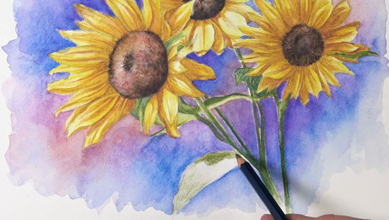 How To Use Watercolor Pencils Watercolor Pencil Techniques