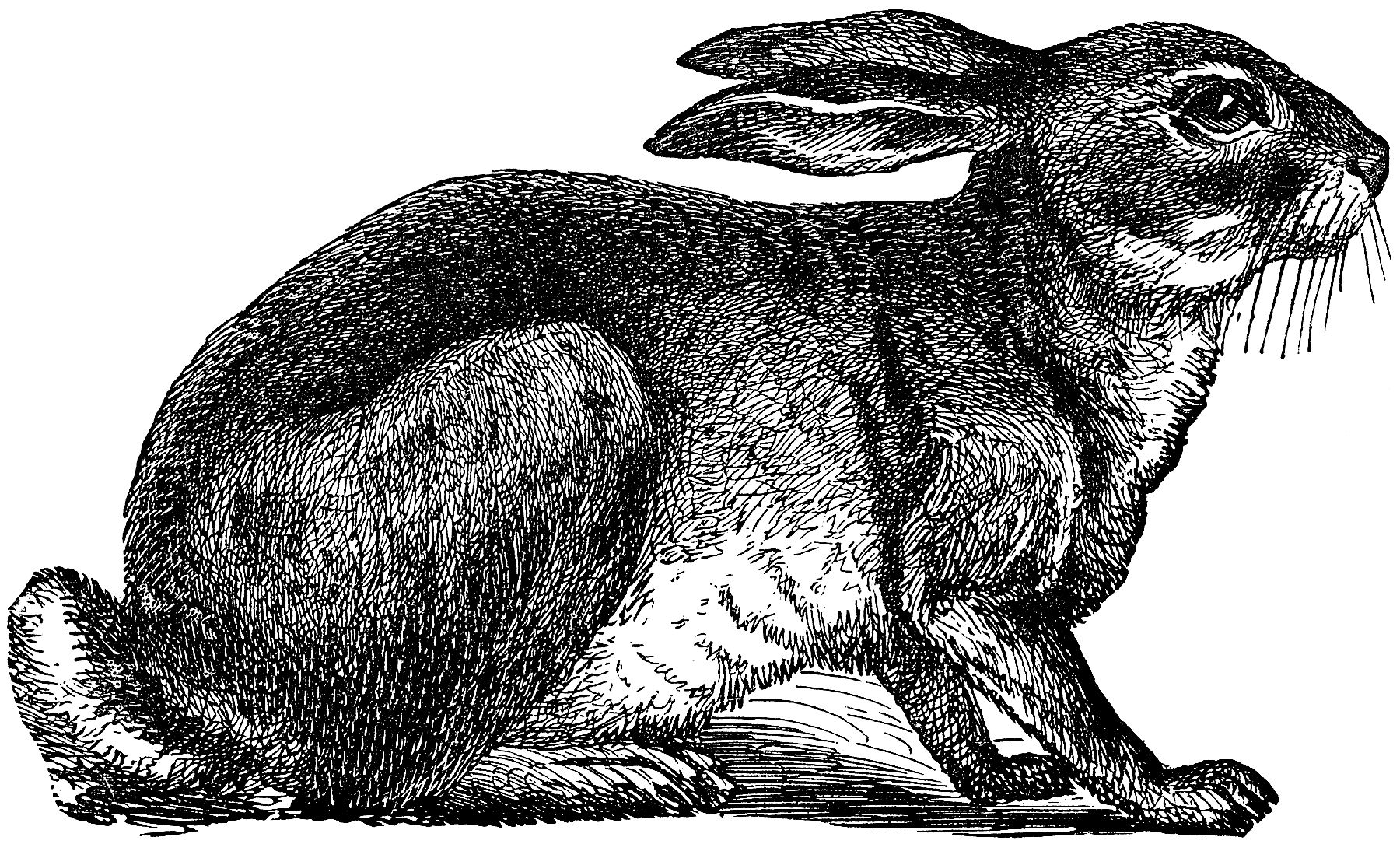 Cute Vintage Black And White Rabbit Engraving!