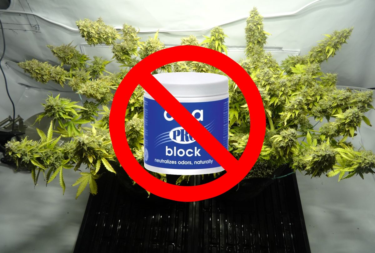 Ona gel should never go in your grow tent or share air with your plants! & Ona gel should never go in your grow tent or share air with your ...