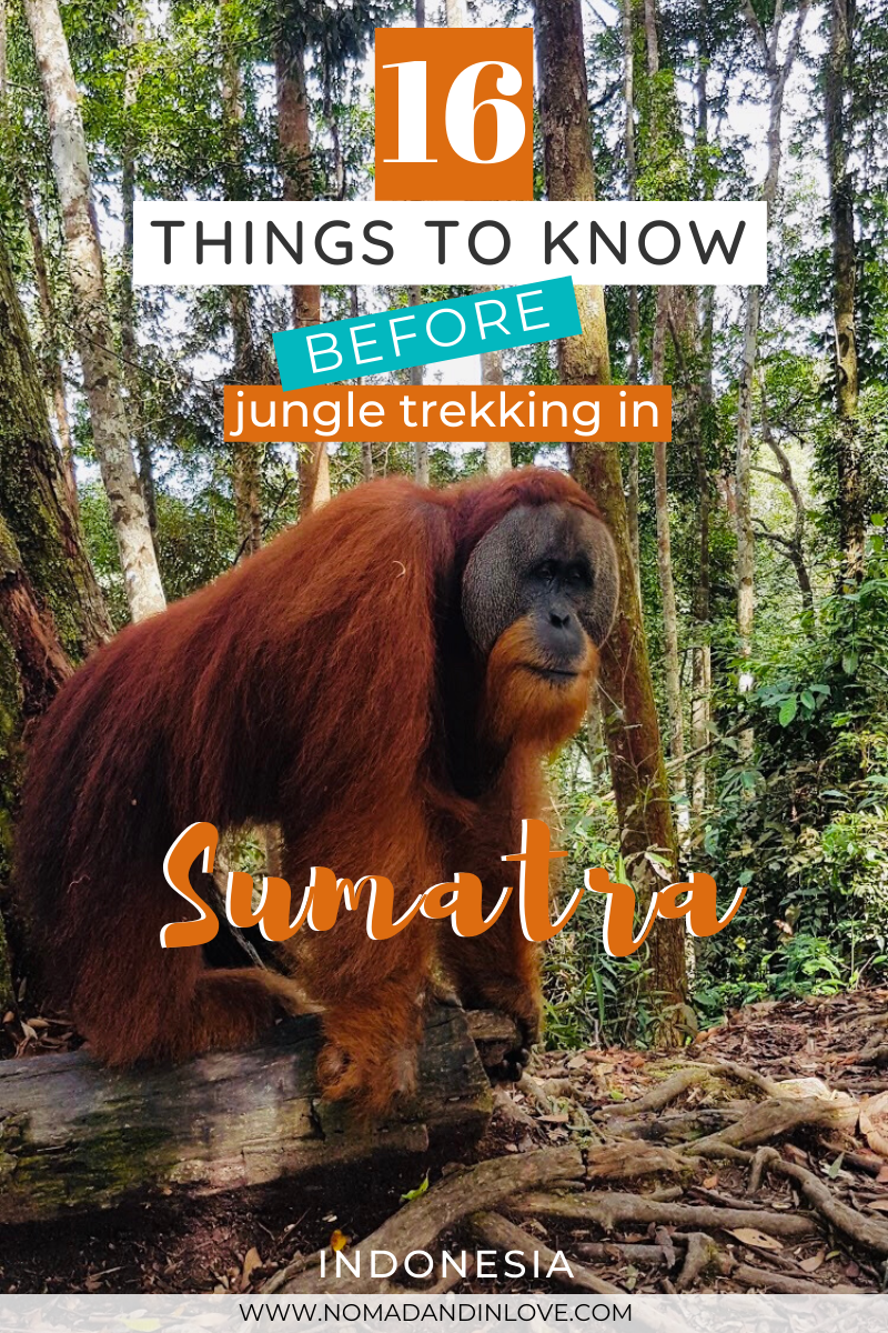 Ecotravel: Orangutan Jungle Trekking in Indonesia - #ecotravel #indonesia #jungle #orangutan #trekking - #ExperiencesQuotes