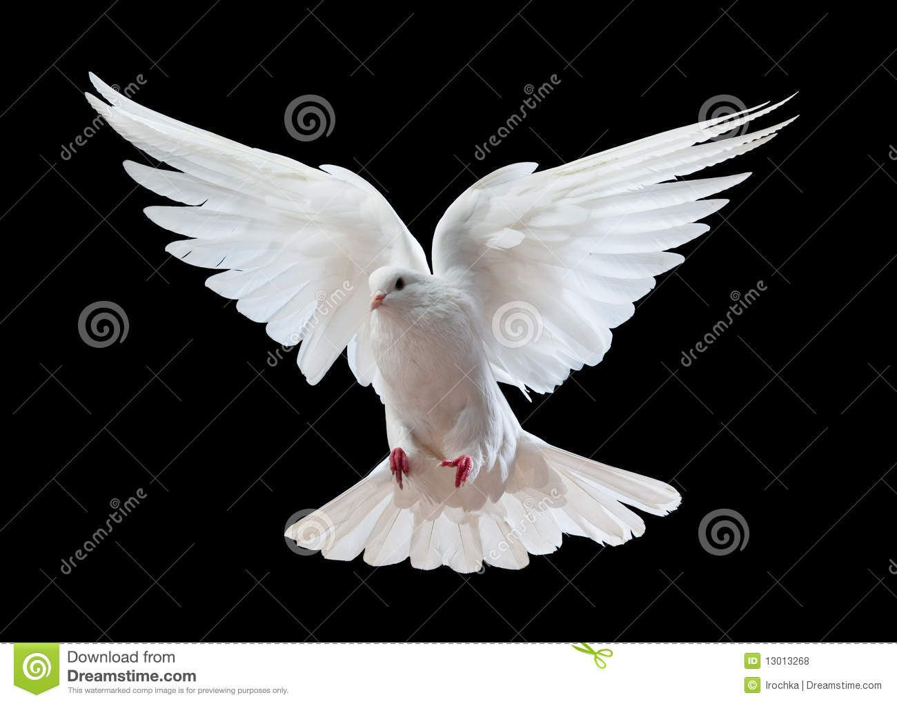 Dove Stock Photos Images Pictures 26 531 Images Dove Images Beautiful Birds White Doves