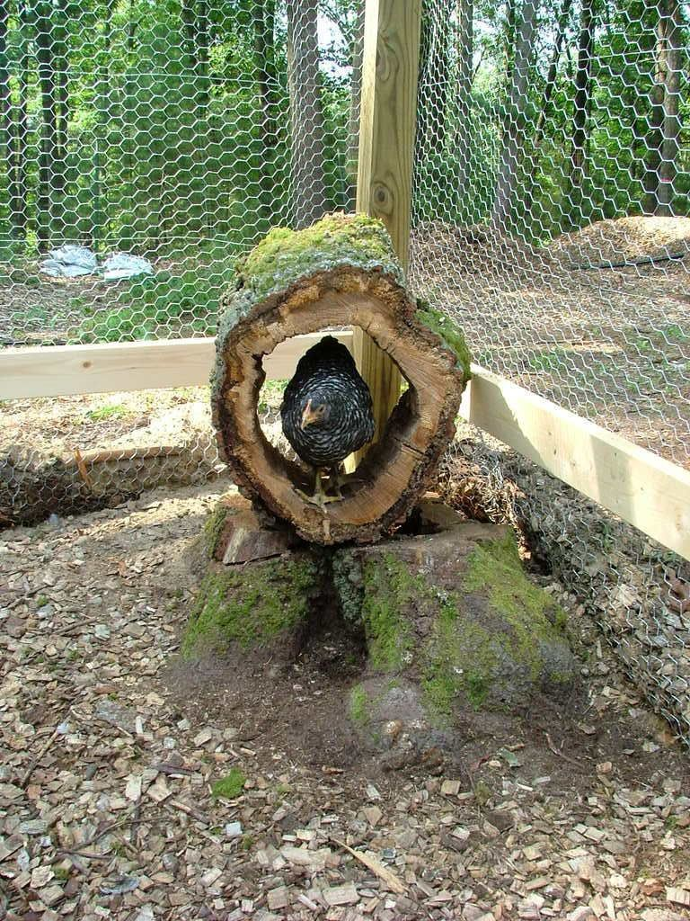 yes hollow log easy peasy ideen f r den h hnerauslauf pflanzen staubbad voliere. Black Bedroom Furniture Sets. Home Design Ideas