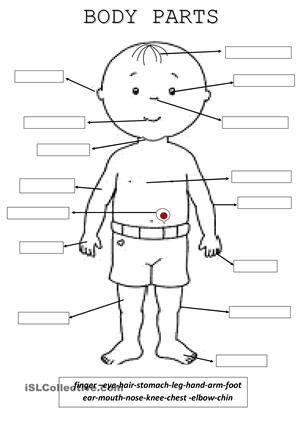 Body Parts - ESL worksheets | Body theme | Pinterest | Worksheets ...