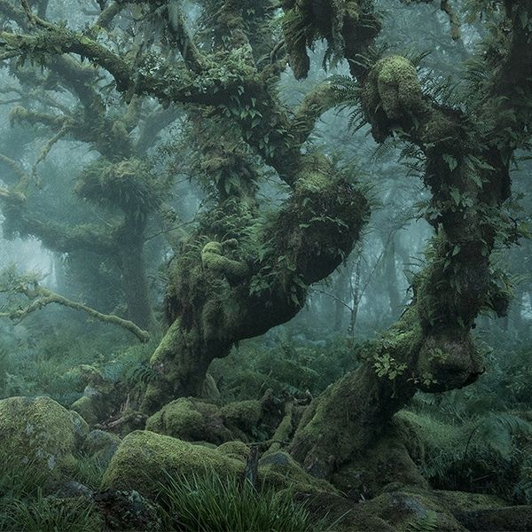 Mystical Photos of Nature Reclaiming Everything in This Enchanting English Forest #landscapephoto