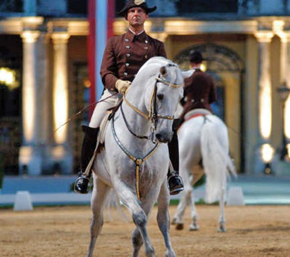The Spanish Riding School of Vienna, Austria, is a traditional riding school for Lipizzan horses, which perform in the Winter Riding School in the Hofburg.