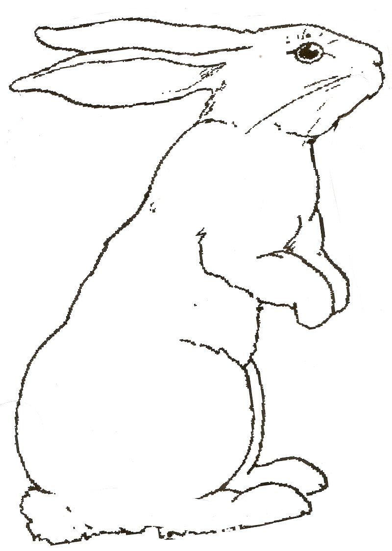 Free Coloring Pictures Of Rabbits Rabbit Pictures To Print 800 1126 Bunny Coloring Pages Animal Drawings Animal Coloring Pages