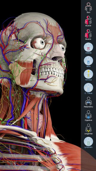 Essential Anatomy 5 Is A Full Featured Anatomical Reference App
