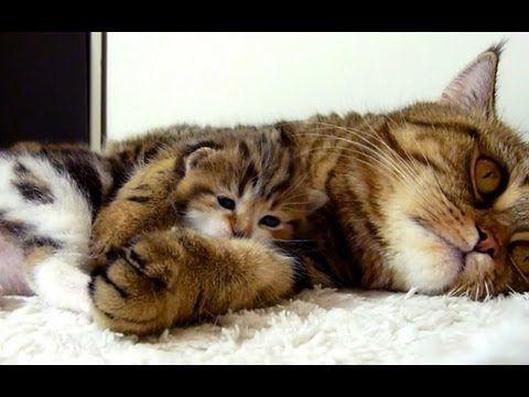 Kitten Asking Mom for Hugs. Sweetest Thing!