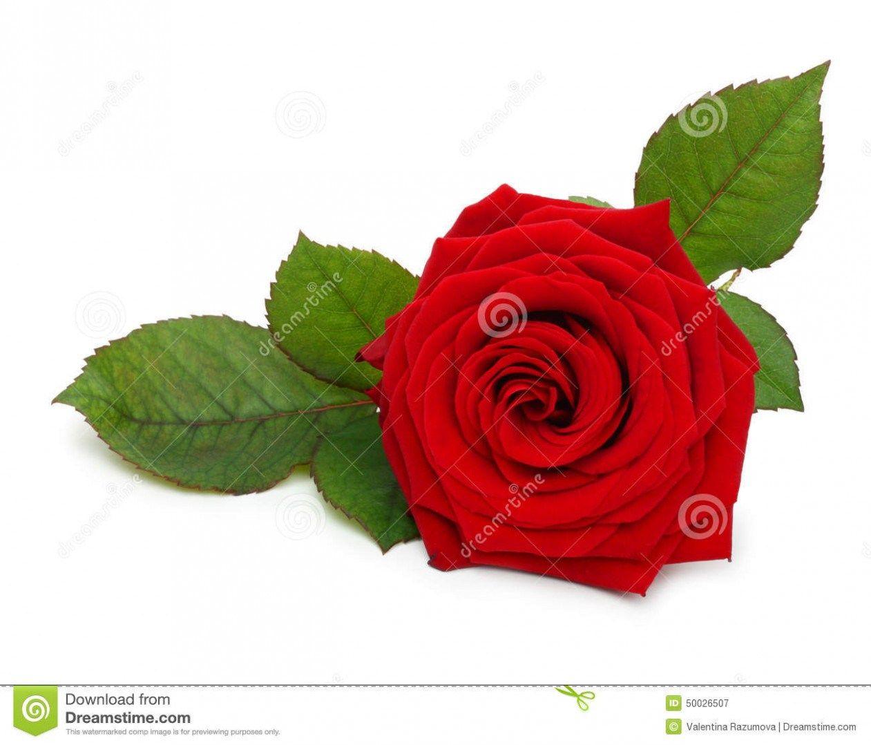 Ten Various Ways To Do Rose Flower Name In Telugu Rose