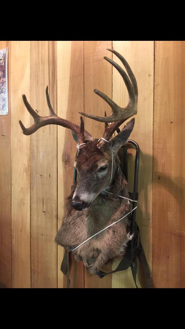 Deer Mounted On Backpack White Tale Deer Billy Morgan