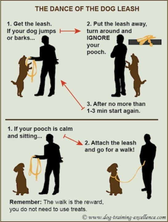 Good Training Info To Get Ready For A Walk Sofie Dog Training
