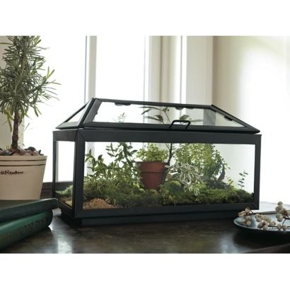 Smith Hawken Steel And Glass Terrarium Glass Terrarium Decor