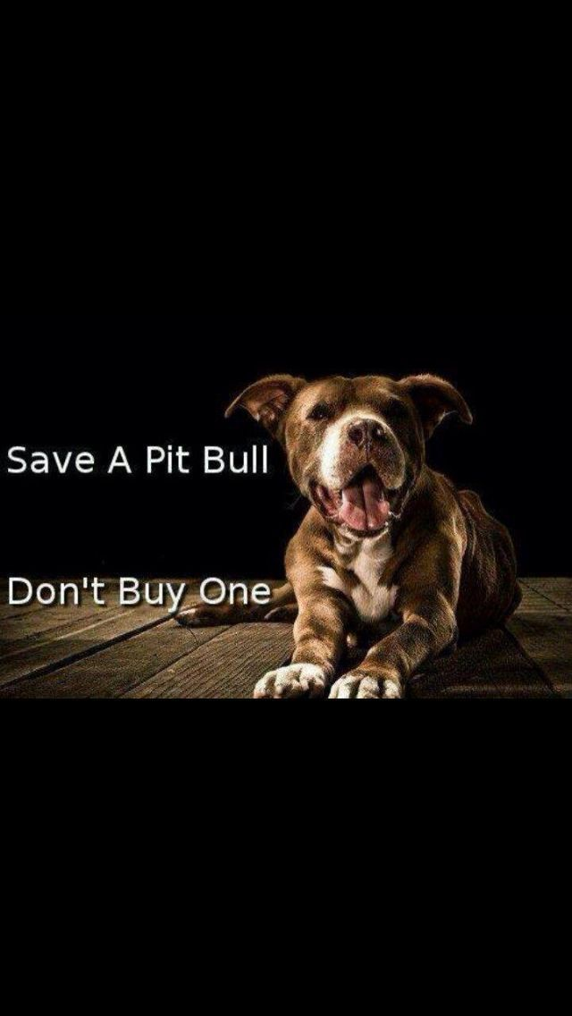Homeless Pit Bulls are killed EVERY SINGLE DAY in shelters