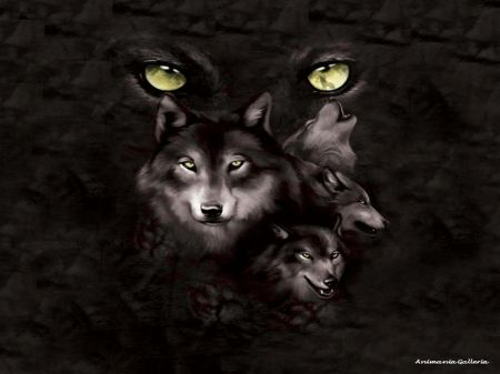 Pin On Wolves
