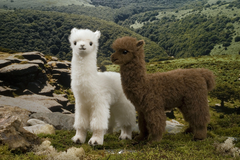 baby alpacas http//ift.tt/2dzuDgd Cute alpaca, Cute