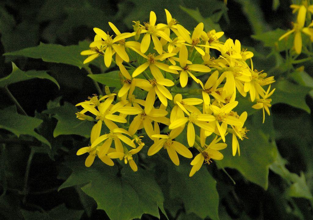 AprendaCultivar.com.br - Como plantar flores, plantas, frutíferas ...